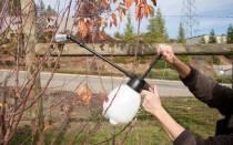 Опрыскивание медным купоросом сада осенью