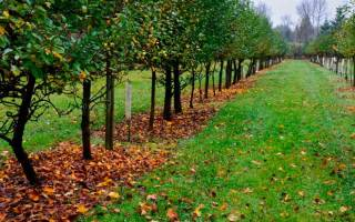 Уход за молодыми плодовыми деревьями осенью и профилактика болезней