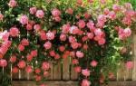 Как узнать название комнатного цветка по внешнему виду