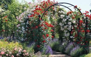 Калийно фосфорные удобрения для роз