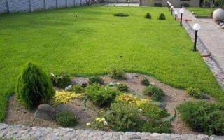 Газонная трава лилипут состав семян