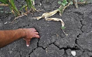 Почему трескается земля на грядках после полива что делать