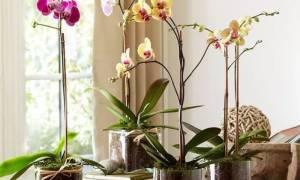 Как ухаживать за комнатной орхидеей в домашних условиях