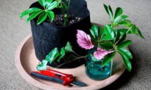 Комнатные цветы как размножать