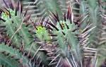 Как ухаживать за маленькими кактусами