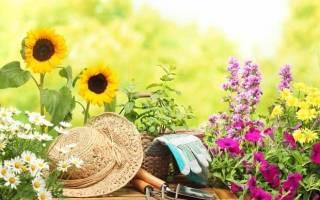 Можно ли поливать цветы глюкозой