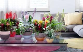 Каталог полезные Комнатные цветы