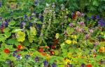 Посев однолетних морозоустойчивых цветов