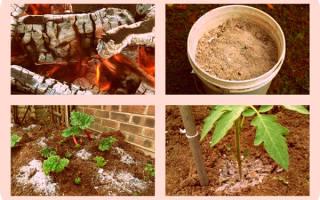 Перегной для комнатных растений