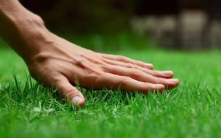 Удобрение для газонакогда подкормить траву