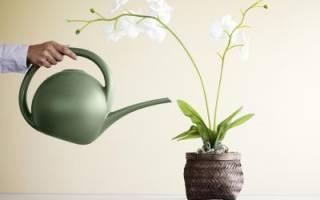 Сколько времени нужно держать в воде орхидеи для полива
