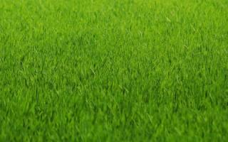 Подкормка травы лилипут
