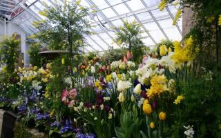 Теплицы для выращивания цветов круглый год