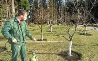 Опрыскивание сада осенью медным купоросом