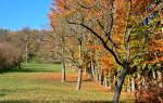 Уход за молодыми яблонями осенью обрезка