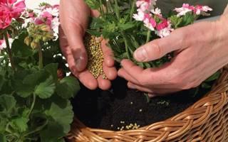 Азотные удобрения для комнатных цветов