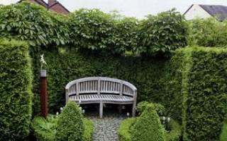 Тенелюбивые деревья для сада многолетние