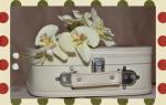 Подарили орхидею как ухаживать в домашних условиях
