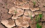 Сидераты когда сеять осенью и когда закапывать