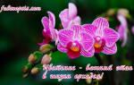 Как ухаживать за подростками орхидеи
