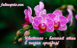 Подростки орхидей как ухаживать