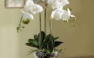 Как ухаживать за орхидеей отцветшей