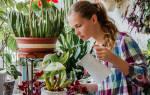 Умеренный полив комнатных растений это сколько раз в неделю