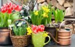 Цветы комнатные луковичные каталог