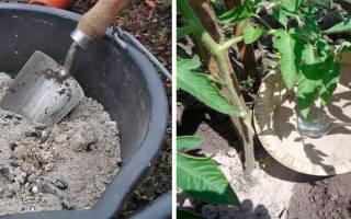 Как приготовить настой из золы для полива комнатных растений