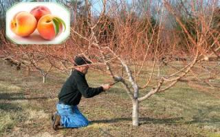 Уход за персиком осенью подготовка к зиме