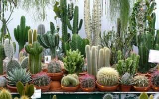 Грунт для кактусов своими руками