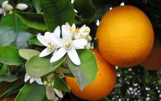 Прикладываем свечу к хвостику апельсина