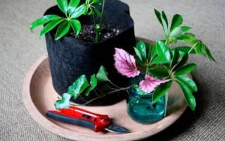 Как комнатные цветы размножать