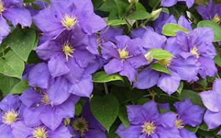 Цветы под осень посадка и уход