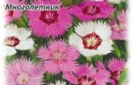 Цветы для дачи многолетники каталог