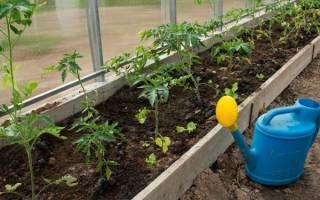 Дополнительный дневной полив помидоров в теплице