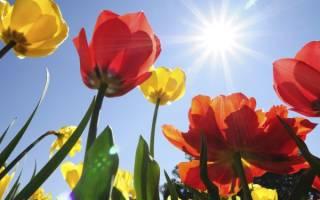 Многообразие тюльпанов делает ваш сад бесподобным