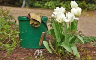 Уход за тюльпанами выкапывать ли осенью