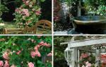 Роза плетистая в интерьере сада