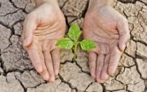 Как определить почву если после полива летом почва трескается