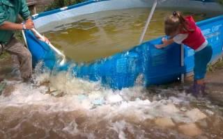 Можно ли использовать очищенную воду для полива из бассейна