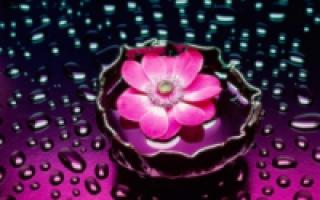 Уход за розами в саду кустарниковые