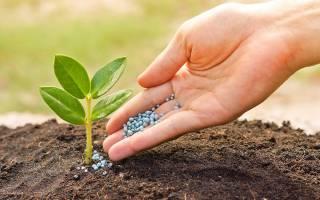 Перегной универсальное удобрение для растений