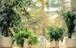 Как сделать систему полива своими руками для комнатных растений