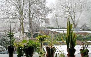 Удобрение для комнатных цветов осенью и зимой