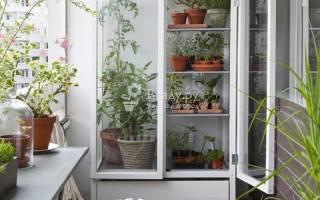 Мини теплица на балконе для цветочных многолетников