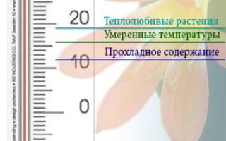 Оптимальная температура для комнатных растений