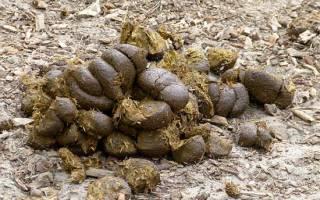 Прогрев почвы в теплице навозом