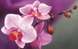 Орхидеи возле окна