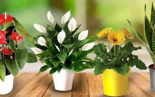 Как оставить цветы на время отпуска без полива на